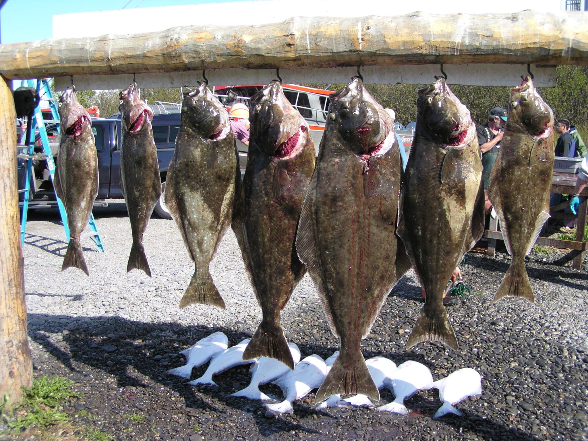 several fish hanging on a line