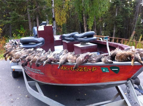 Boat on trailer lined with ducks from a successful hunting trip.